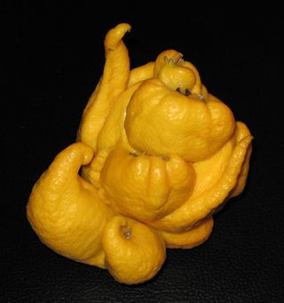 Deformed lemon copy 72