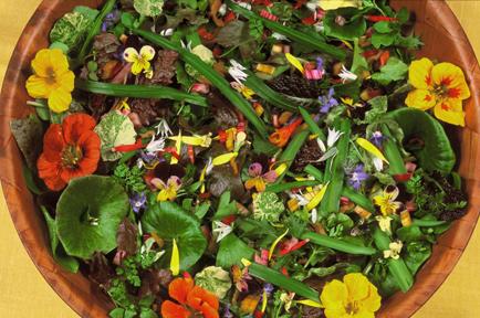 Winter Salad copy 72