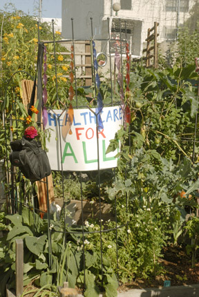 Tomatoes health care 09 018 copy