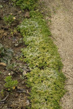 Dec 09 Vegetables 006 copy