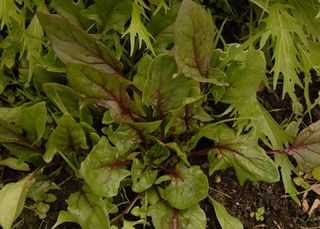 Dec 09 Vegetables 010 copy