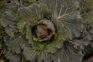 Dec 09 Vegetables 016 copy