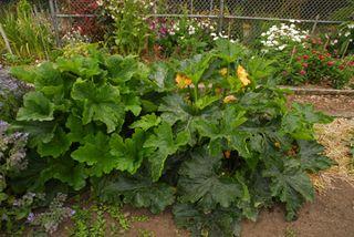 Lg Zuch plants 038 copy