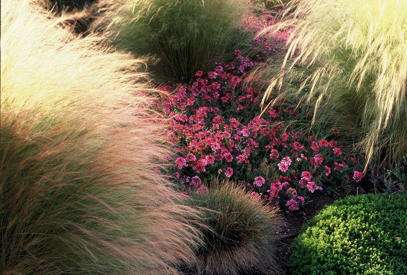 Sample garden shots--David 004 at 72