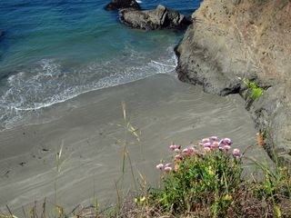 Beach aster IMG_7002 copy