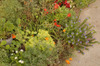 Midnov_07_054_front_garden_1copy