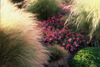 Grasses_and_verbena_72dpi_2