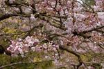 Mid_march_08_036_copy