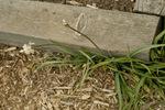 Mid_april_2008_068_copy